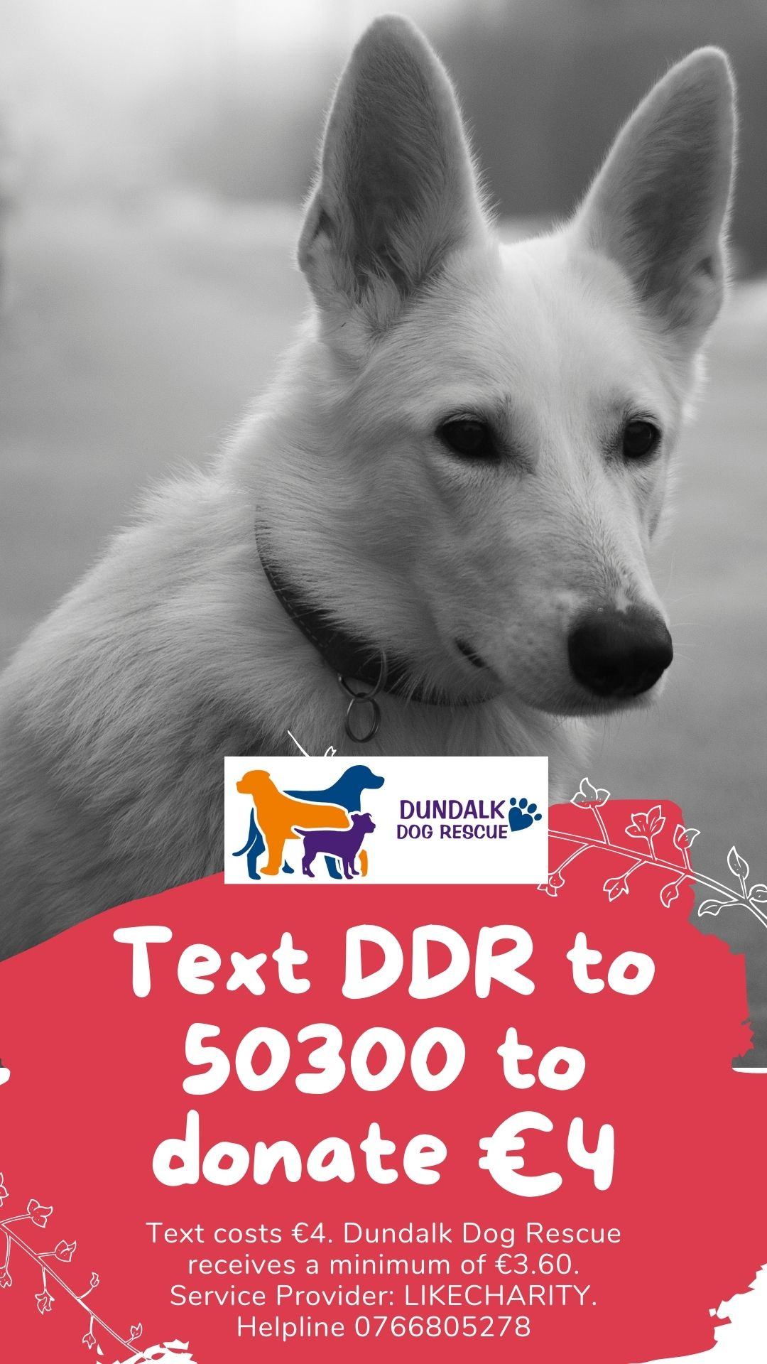 Text DDR to 50300 to Donate €4