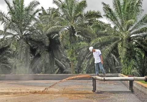 Manfaatkan Biofuel Tekan Impor BBM, Indonesia Butuh 15 Juta Hektare Lahan Sawit