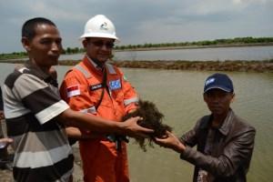 Panen rumput laut warga binaan PT Pertamina EP Field Tambun di Desa Pantai Harapan, Kecamatan Muara Gembong, Bekasi.