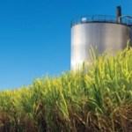 LIPI Kembangkan Supermikroba Penghasil Biorefineri