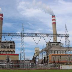 9 Million Tons of Biomass Needed, PLN Targets 52 Steam Power Plants to Implement 10.6 GW of Co-firing by 2025