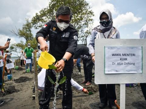 Kendalikan Perubahan Iklim, Kementerian LHK Gencarkan Padat Karya Penanaman Mangrove