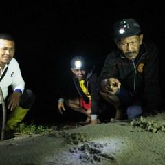 Lestarikan Lingkungan dan Keanekaragaman Hayati, PEP Asset 1 Rantau Field Selamatkan Telur Tuntong