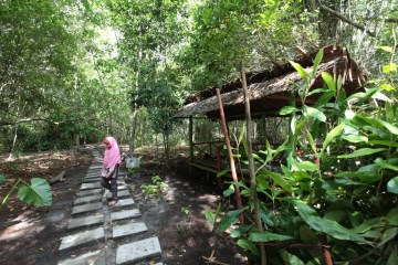 Mengenal Arboretum Gambut Marsawa, Eduwisata Pemangsa Serangga di Sungai Pakning