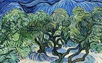Ölmez Ağaç Zeytin