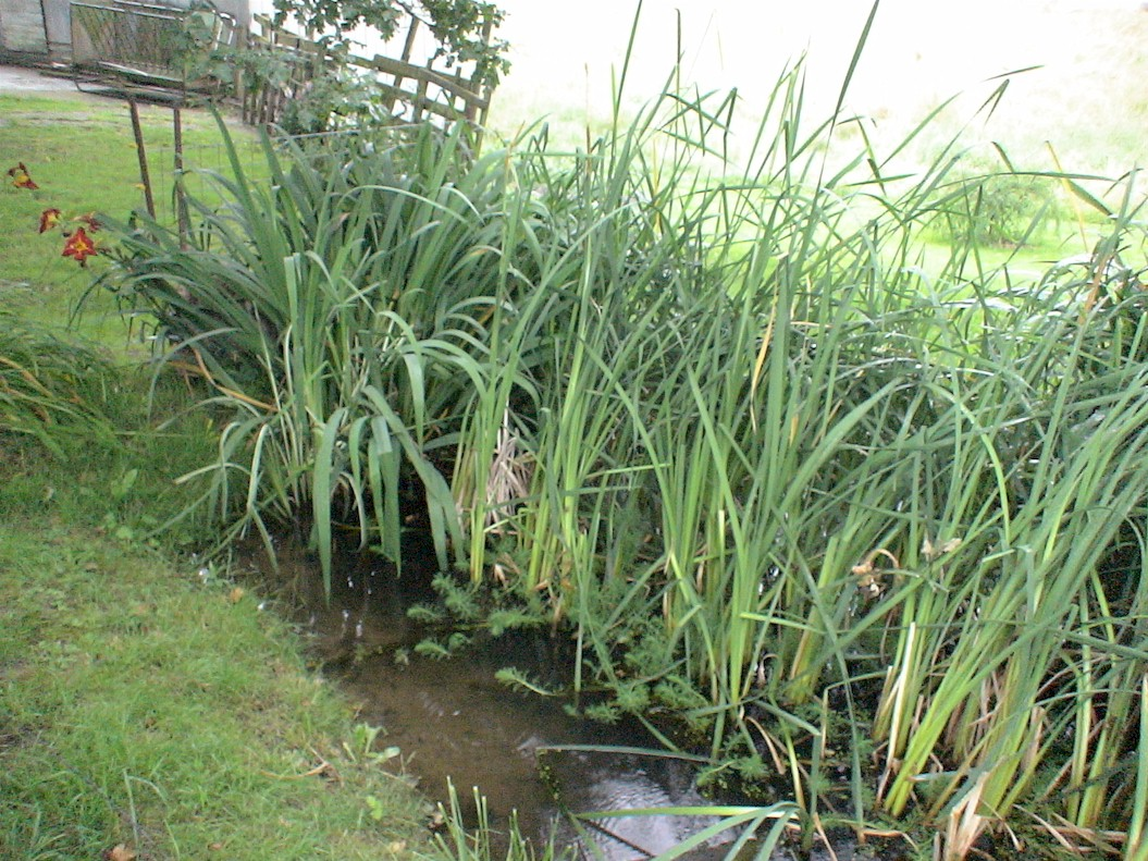 Water Plants Ponds