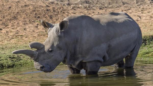 la-me-ln-white-rhino-dies-safari-park-20141214-001