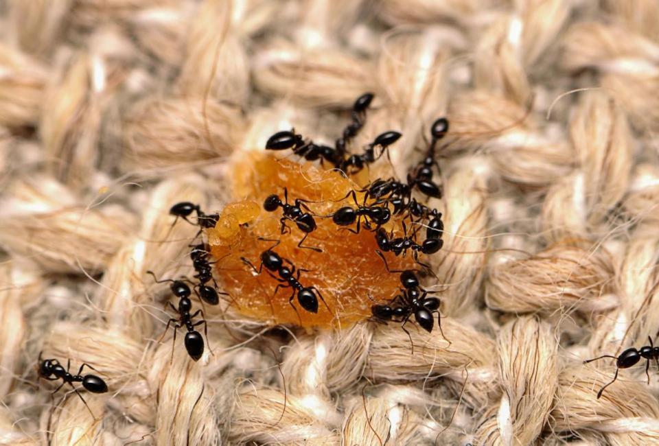 housebugs.adapt.1190.1