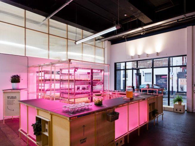 ikea-space-10-indoor-farm-designboom-1-818x614