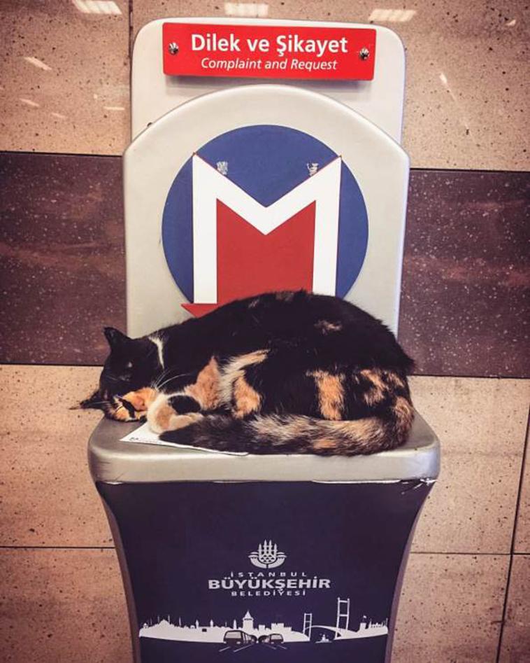 istanbul-metro-kedi