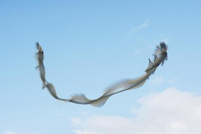 moving-birds-flight-paths-patterns-sky-9.adapt.945.1