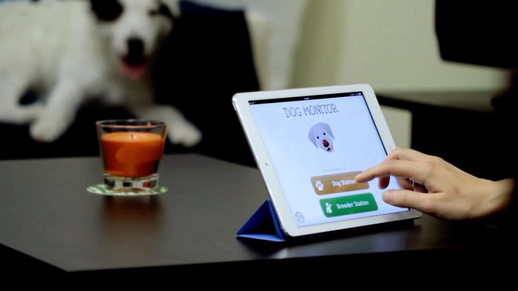 pet-monitoring-camera