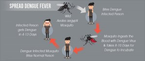 spread-dengue-fever