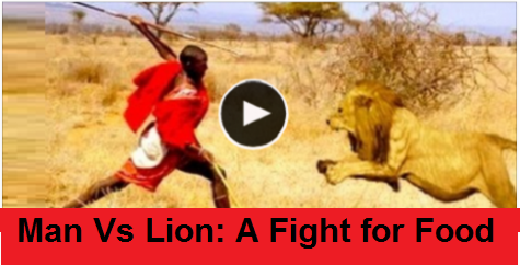 Man Vs Lion: A Fight for Food – Watch Video