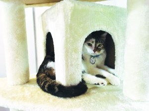 Jamie Crow   Staff writer  Colony Cafe's goal is to always have a group of twelve adoption-ready cats in residence.