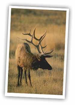 elk hunting in durango