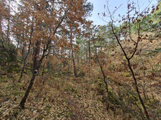 Senda Cascadas duruelo