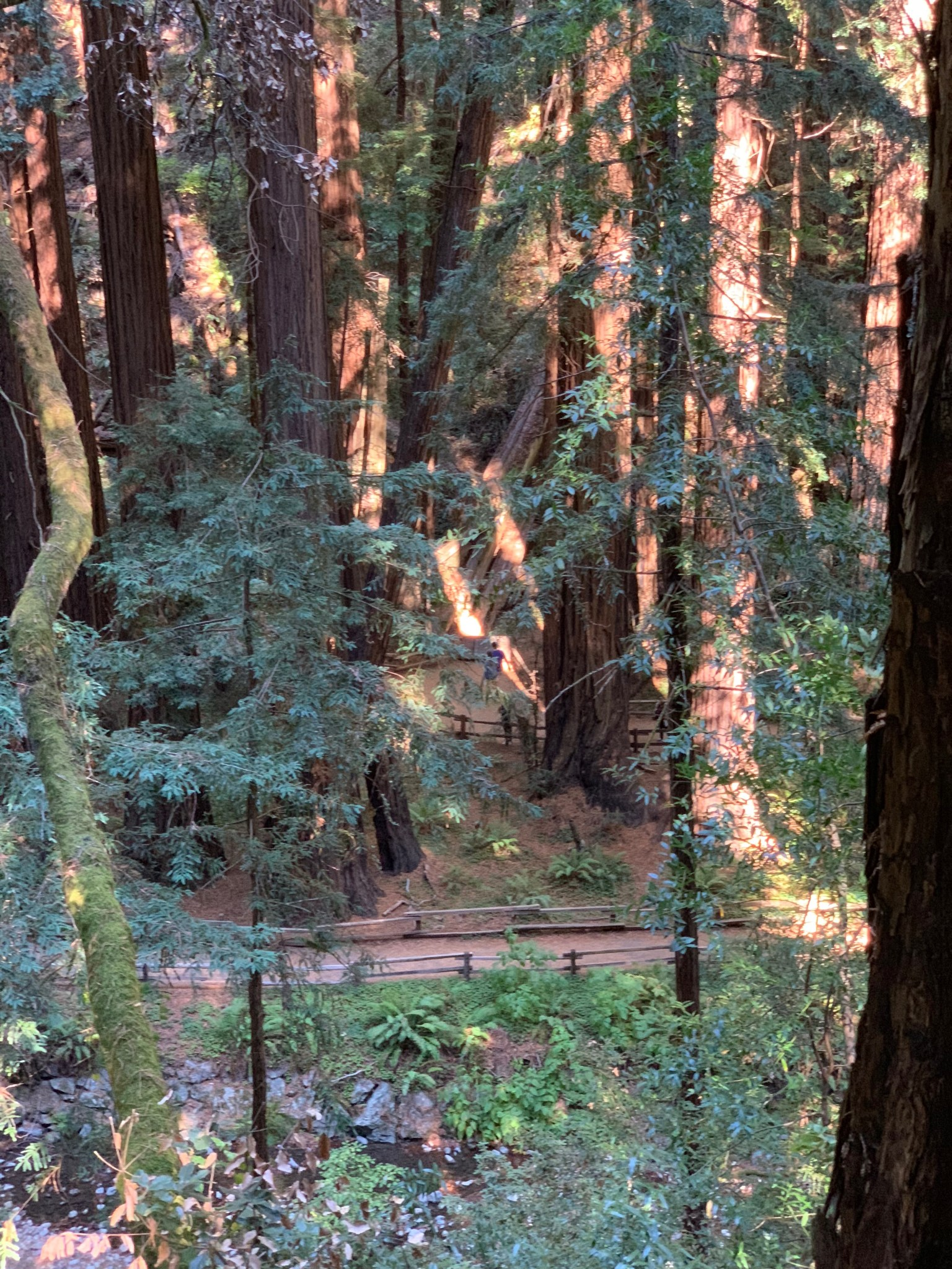 Hillside Trail Muir Woods