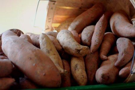 Sweet Potatoes by Jamonation