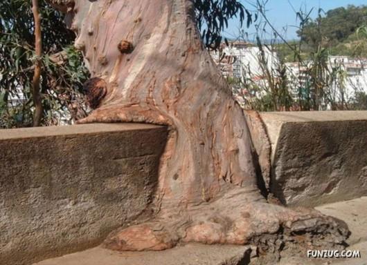 trees, unusual, funzug