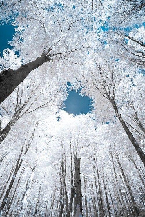 trees, white