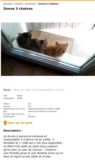 DONNE 3 CHATONS