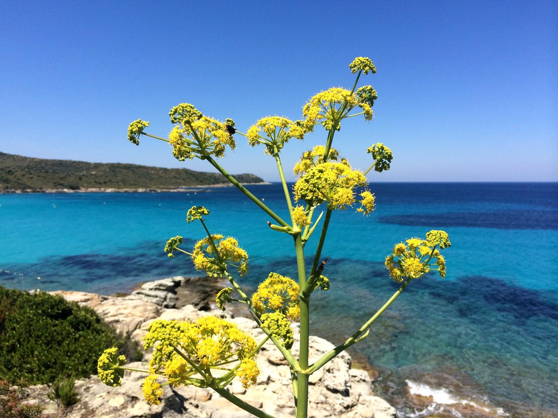 plage du lotu corse corsica blog voyage road trip 04