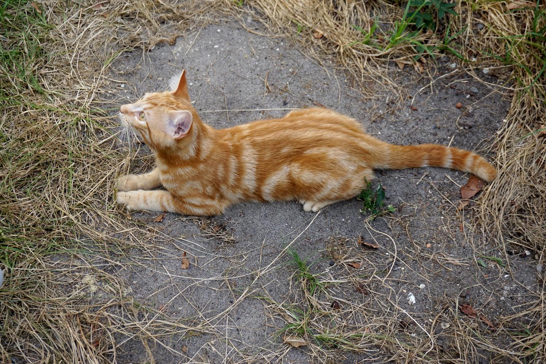 Dali onedaywithdali on a sauvé le bébé chat blog tourisme corse dutalonaucrampon 01