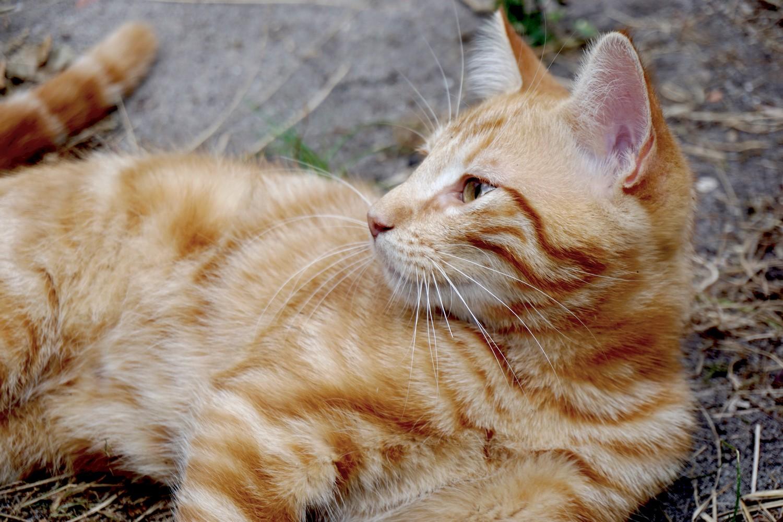 Dali onedaywithdali on a sauvé le bébé chat blog tourisme corse dutalonaucrampon 05