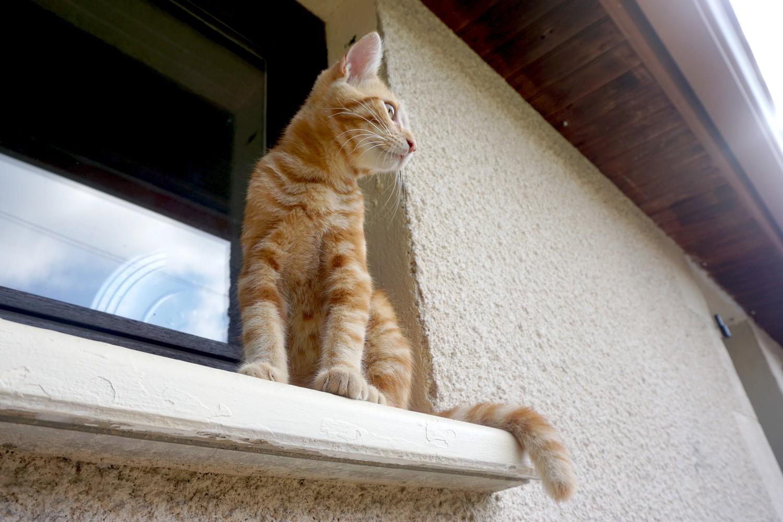 Dali onedaywithdali on a sauvé le bébé chat blog tourisme corse dutalonaucrampon 09