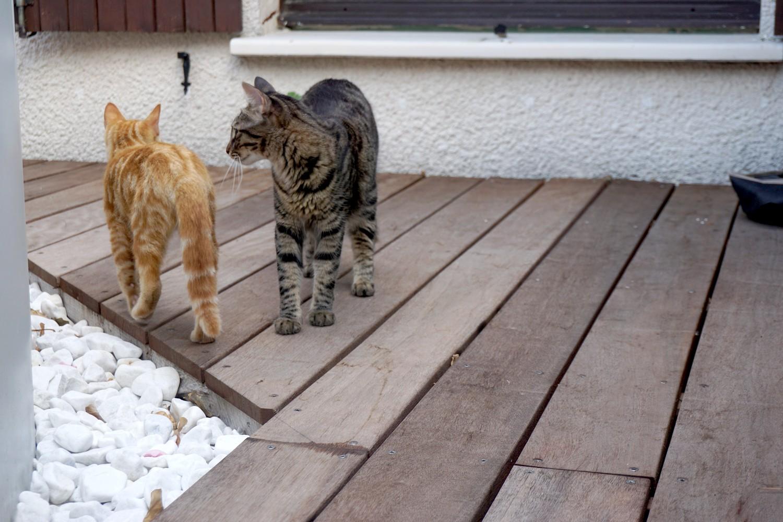 Dali onedaywithdali on a sauvé le bébé chat blog tourisme corse dutalonaucrampon 10