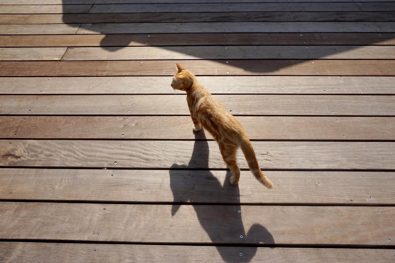 Dali onedaywithdali on a sauvé le bébé chat blog tourisme corse dutalonaucrampon