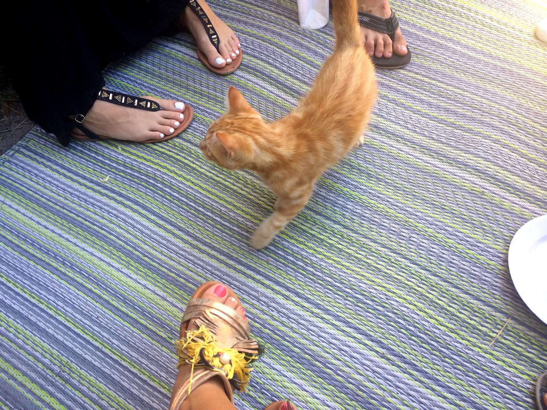 SOS bébé chat recherche famille dutalonaucrampon blog voyage corse 01