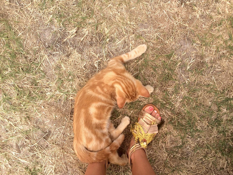 SOS bébé chat recherche famille dutalonaucrampon blog voyage corse 05