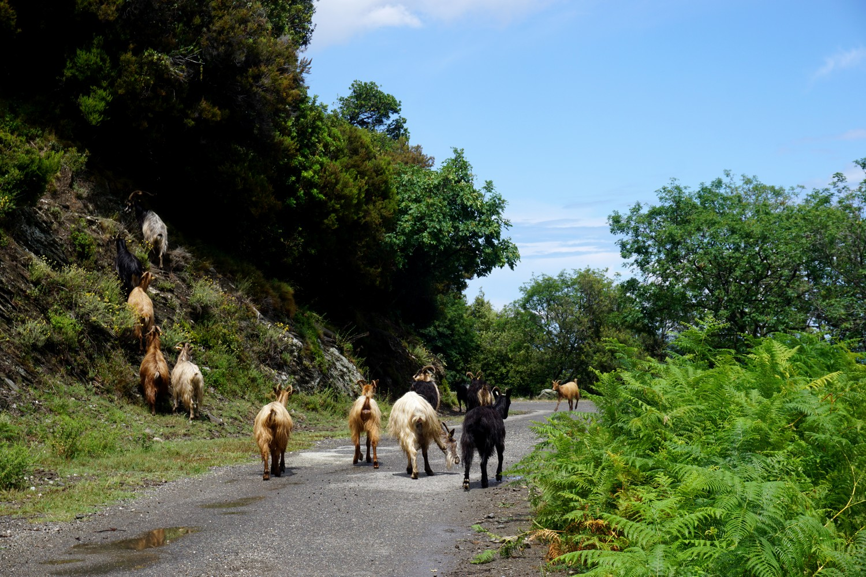 road-trip-corse-blog-voyage-vacances-entre-amis-75