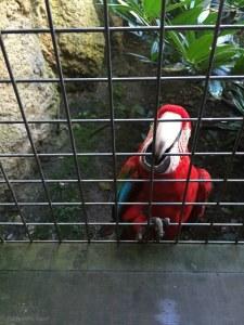 Parrot at Rotterdam Zoo