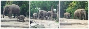 Rotterdam Zoo Elephants