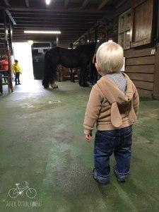 Breda Horse