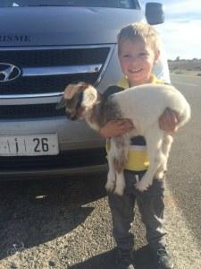 Essaouira Hold a Baby Goat