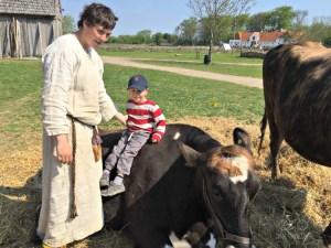 Viking Cow Meet & Greet