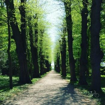 Woods at Egeskov Castle