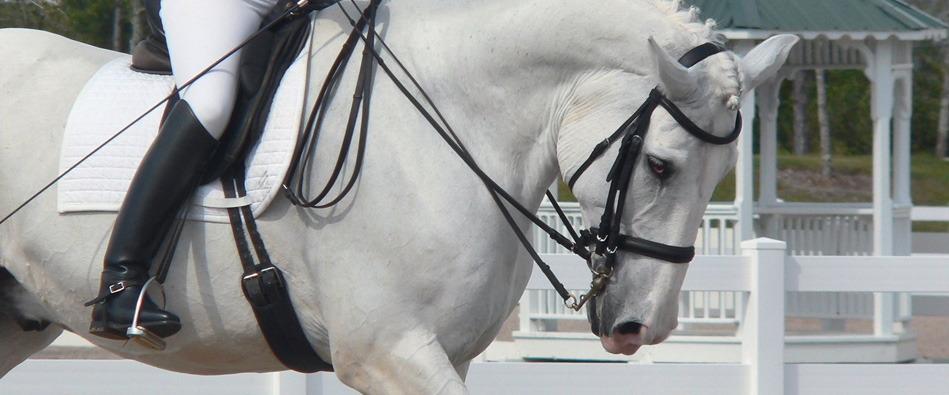 Loxley by Bliss dressage saddle banner