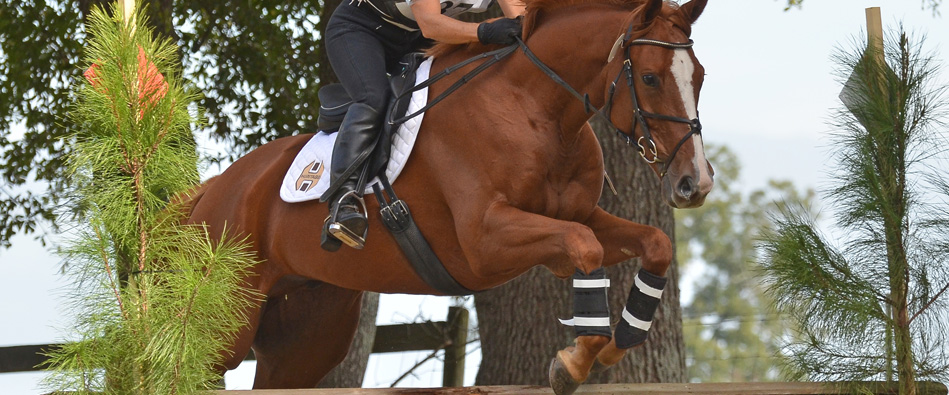 Loxley by Bliss jump saddle banner
