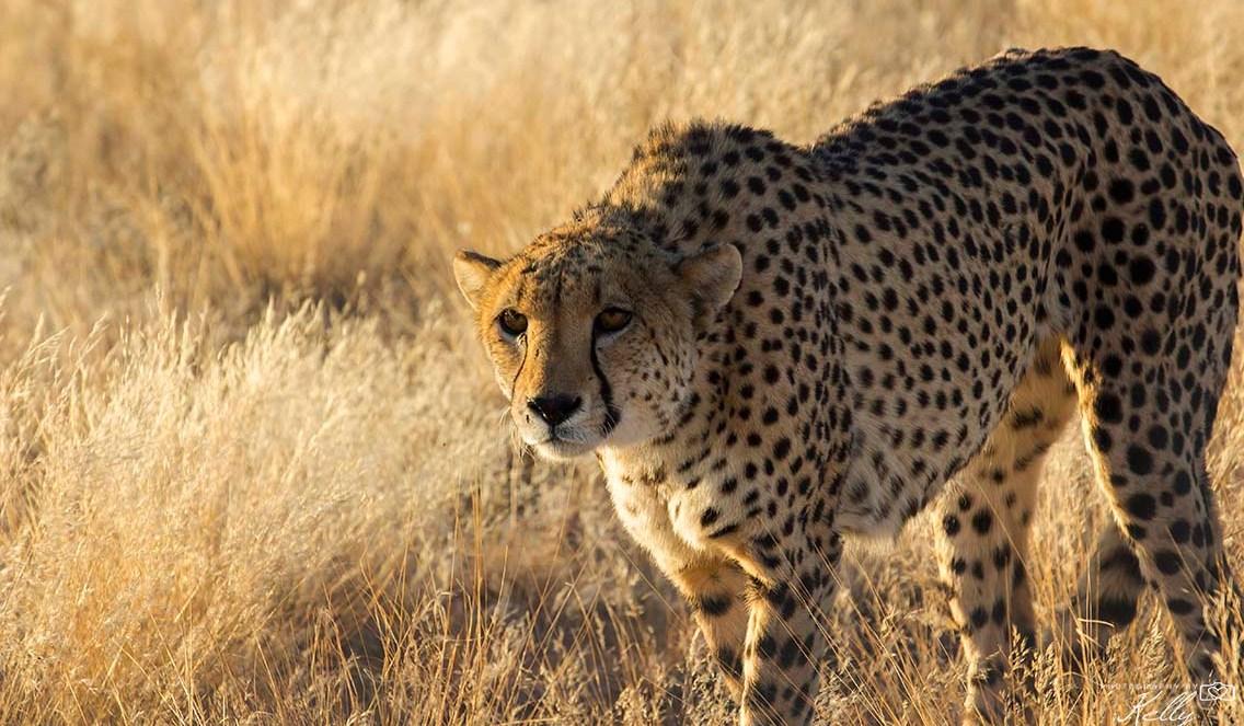 Waarom op safari