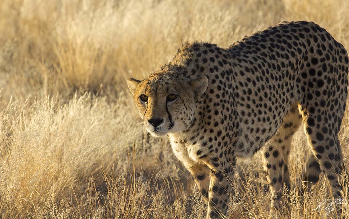 wildlife fotograferen