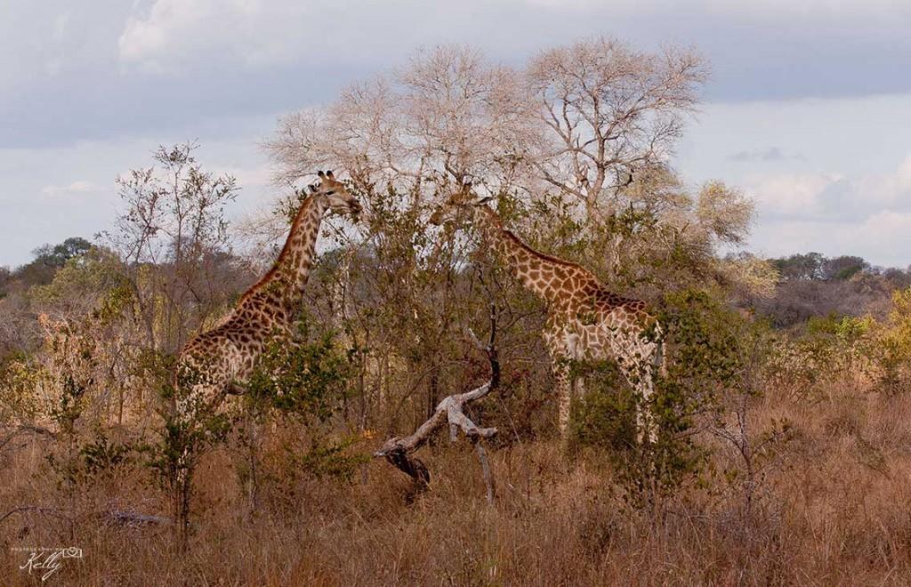Kruger, Zuid-Afrika