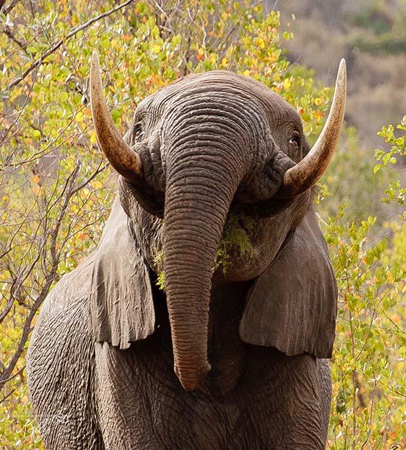 safari Krugerpark