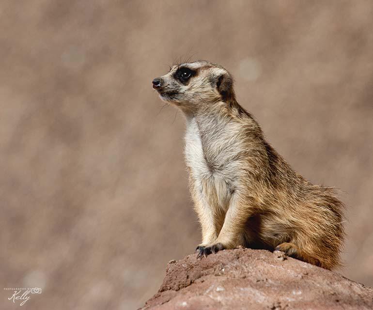 Oudtshoorn Zuid-Afrika