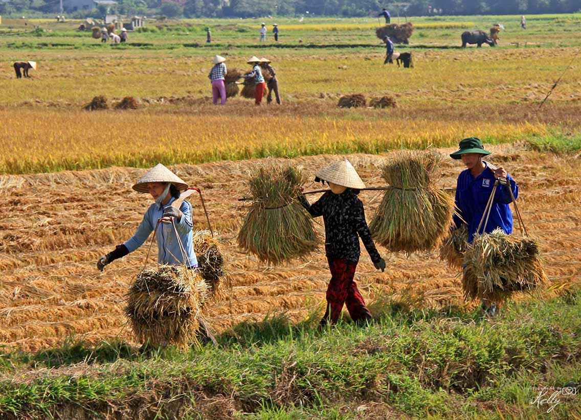 Reisroute door Vietnam