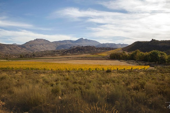 Cederbergen in Zuid-Afrika
